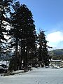 Grand trees of Minashi Shrine (Hida-Ichinomiya) in a snow day.jpg