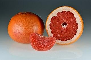Grapefruit citrus fruit