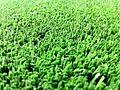 Grasss 3.jpg