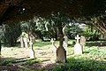 Graves in the trees - geograph.org.uk - 1266082.jpg