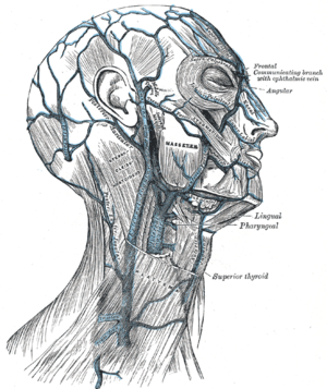 Facial vein - Veins of the head and neck (facial vein labeles as Anterior facial at right center, at cheek, to right of masseter)