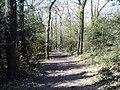 Green Chain Walk in Bostall Woods - geograph.org.uk - 871634.jpg