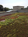 Green roof at NIH Campus 2013.jpg