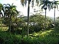 Greenhouse to the north, June 2010 - panoramio.jpg