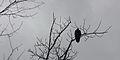 Grey birdie.jpg
