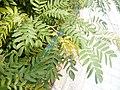 HK 上環 Sheung Wan 卜公花園 Blake Garden plants July 2017 Lnv2 03.jpg