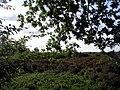 Haarle - 2009 - panoramio.jpg