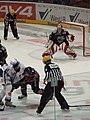 Haie vs Tigers 1.jpg