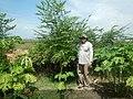 Haiti Reforestation .jpg