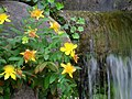 Hakone Gardens, Saratoga, CA - IMG 9208.JPG