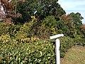 Hamajimacho Hamajima, Shima, Mie Prefecture 517-0404, Japan - panoramio (5).jpg