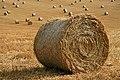 Harvest bales at Legerwood - geograph.org.uk - 902095.jpg