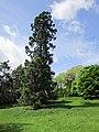 Hawarden Castle Estate (35).JPG