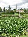 Healthy looking water lilies - geograph.org.uk - 1417208.jpg