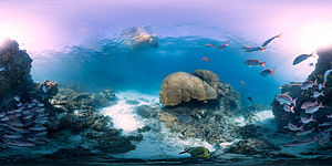 Catlin Seaview Survey - A panorama of the coral reef near Heron Island, taken as part of the Catlin Seaview Survey.