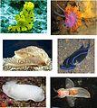 Heterobranchia various examples 2.jpg