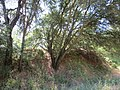 Hiking trail, Fair Oaks, CA - panoramio (1).jpg