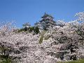 Himejijo sakura2.jpg