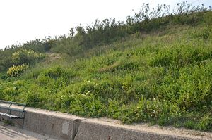Holland-on-Sea Cliff - Image: Holland on Sea Cliff 3