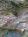 Homoljska potajnica, Žagubica 17.jpg