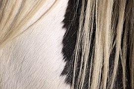 Horse fur & mane hair texture 1.jpg