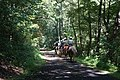 Horseback Riding - New River Trail State Park (24197558555).jpg