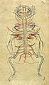 Human figure, venous and nervous system, Persian, 18th C Wellcome L0031821.jpg