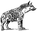 Hyena2 (PSF).png