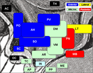 Vasoactive intestinal peptide - Ventromedial hypothalamus (VM), optic chiasm (OC), anterior pituitary (AP), and posterior pituitary (PP) are shown here.