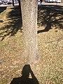 IMG 0284 - panoramio (1).jpg