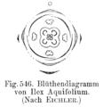Ilex aquifolium flowerdiagram.png