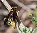Insect of some kind (34018876175).jpg