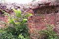 Jakubów zamek 2005 5.JPG