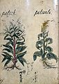 Japanese Herbal, 17th century Wellcome L0030086.jpg