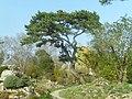 Jardin Botanique - Genève - panoramio (5).jpg