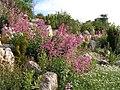 Jardinbotanique11.JPG