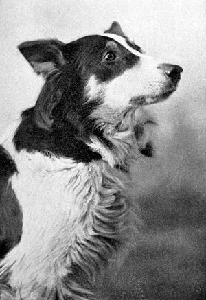 Laurence Trimble - Jean, the Vitagraph Dog