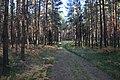 Jesienny spacer - panoramio (4).jpg