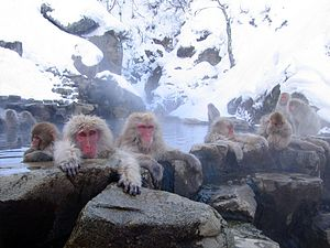 image of Jigokudani hotspring in Nagano Japan 001