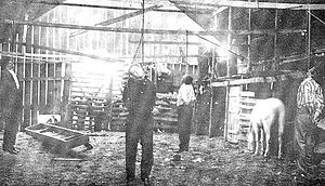 Jim Miller (outlaw) - 'Killer' Jim Miller, far left, wearing black hat, hangs from a livery stable rafter after lynching in Ada, Oklahoma, 1909. The others are Allen, Burrell and West.