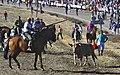 Jinetes y un toro en los encierros de Olmedo.jpg