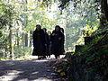 Johannisberg - Nonnen auf dem Weg.jpg