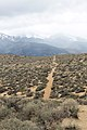 Jumbo Grade Trail - panoramio (74).jpg