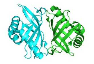Steroid Delta-isomerase - Image: KSI Py MOL homodimer