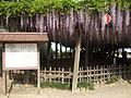 Karatsu fuji.JPG