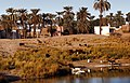 Karnak village-04-See-Palmen-Vieh-1982-gje.jpg