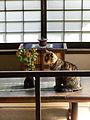 Kawai Kanjiro's House, Kyoto (4607488911).jpg