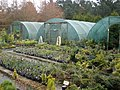 Kenwith conifer tree nursery - geograph.org.uk - 1199851.jpg