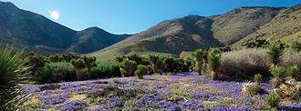 Kiavah Wilderness - Spring flowers in the Klavah Wilderness