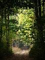 Kowanowko forests, gm. Oborniki (4).JPG